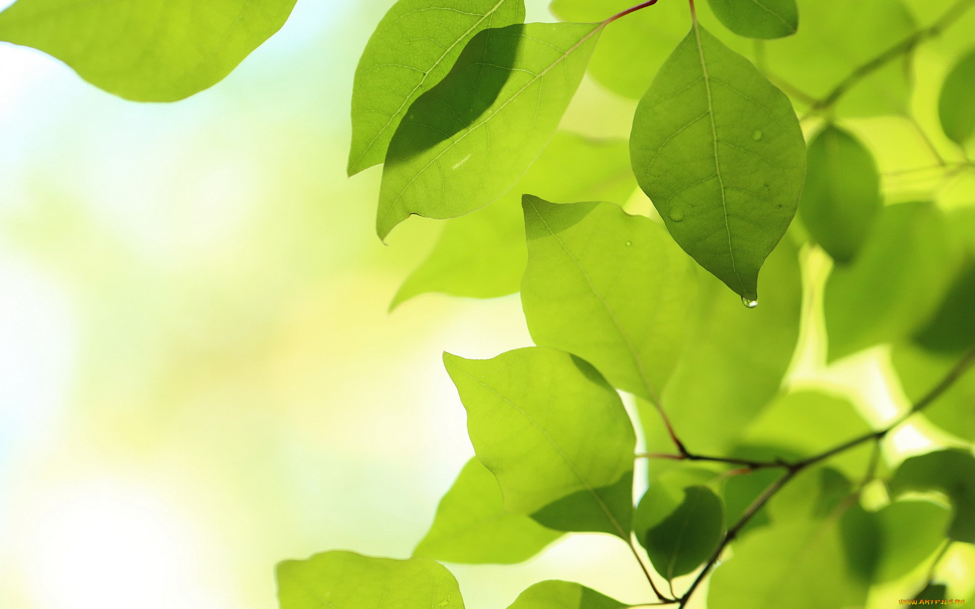 картинки природа листочки очередной раз